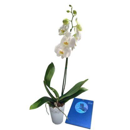 Bono de Condolencia Mariposa + Orquídea 1