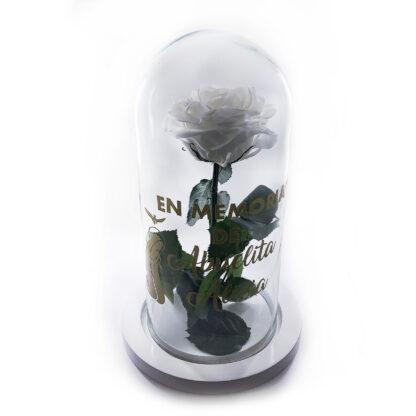 Rosa Blanca preservada personalizada 1